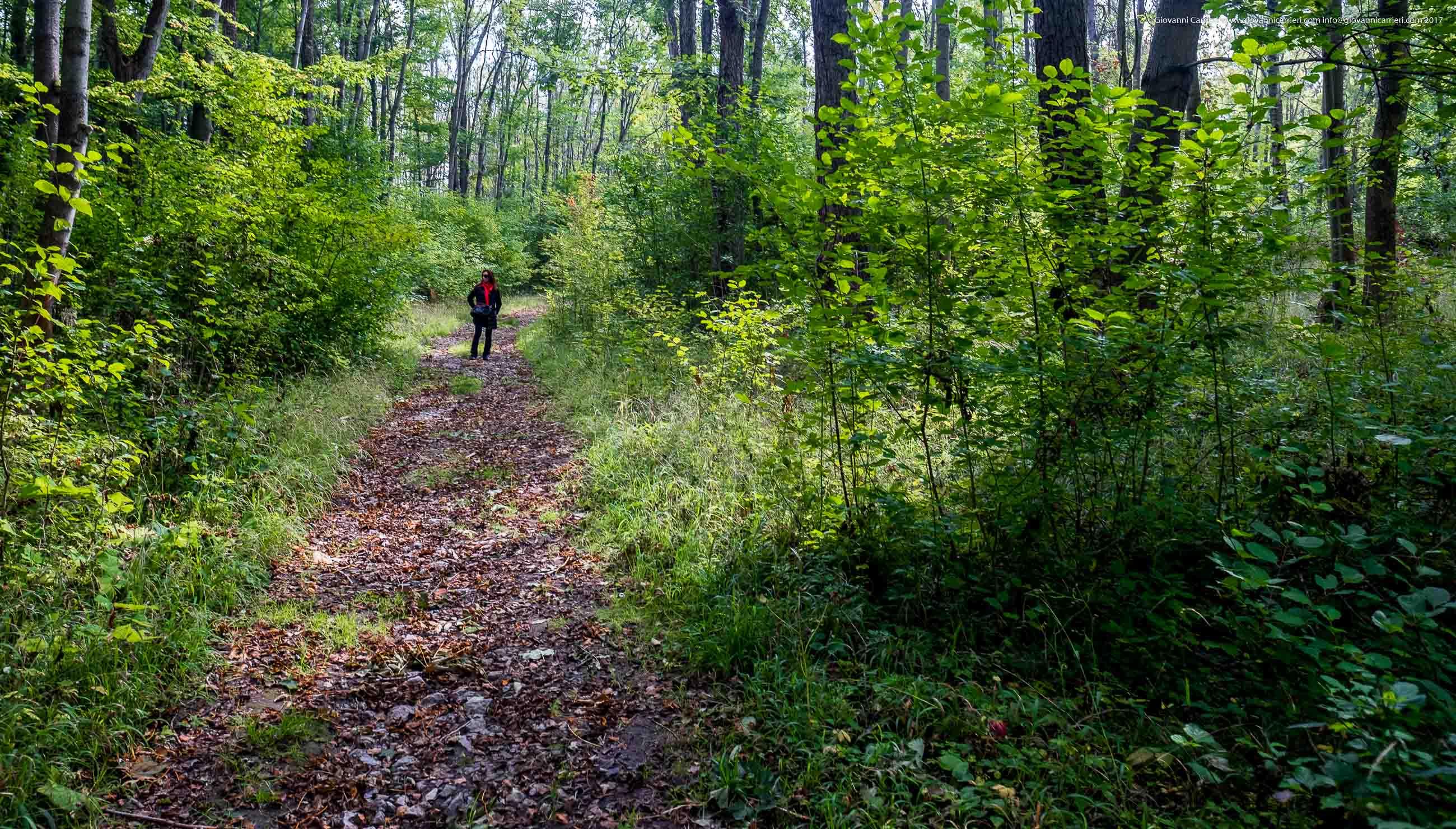 La foresta di faggi di Buchenwald