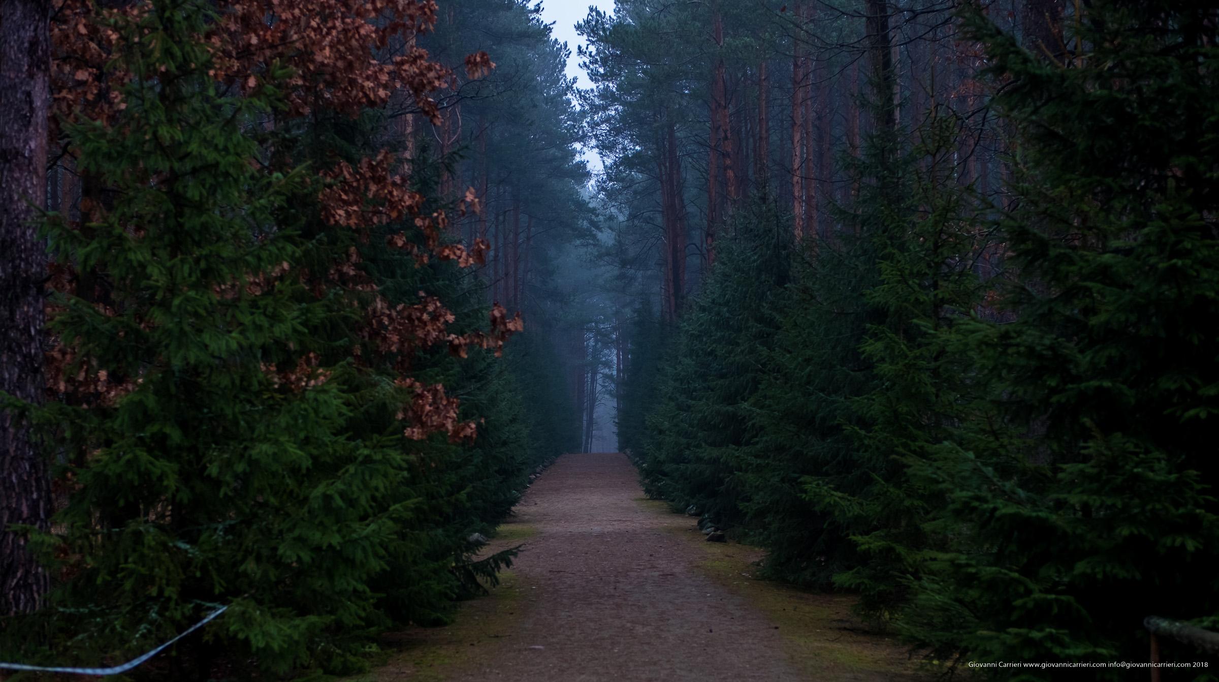 """""""La strada verso il paradiso"""""""