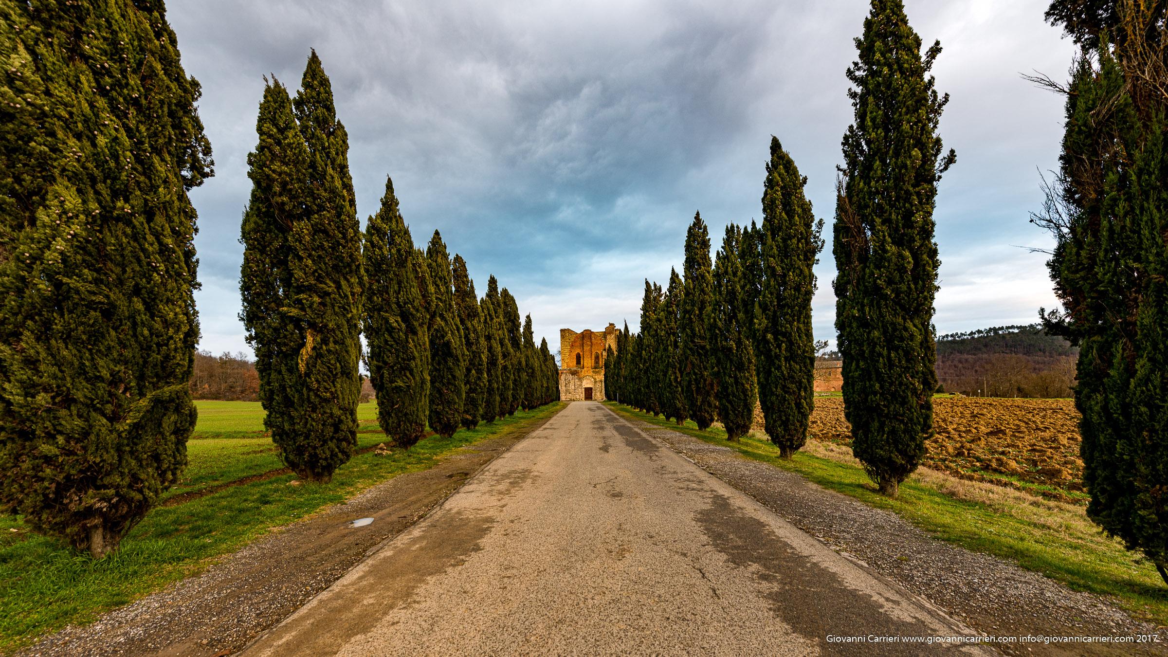 Ruin of San Galgano Abbey and its tree-lined street