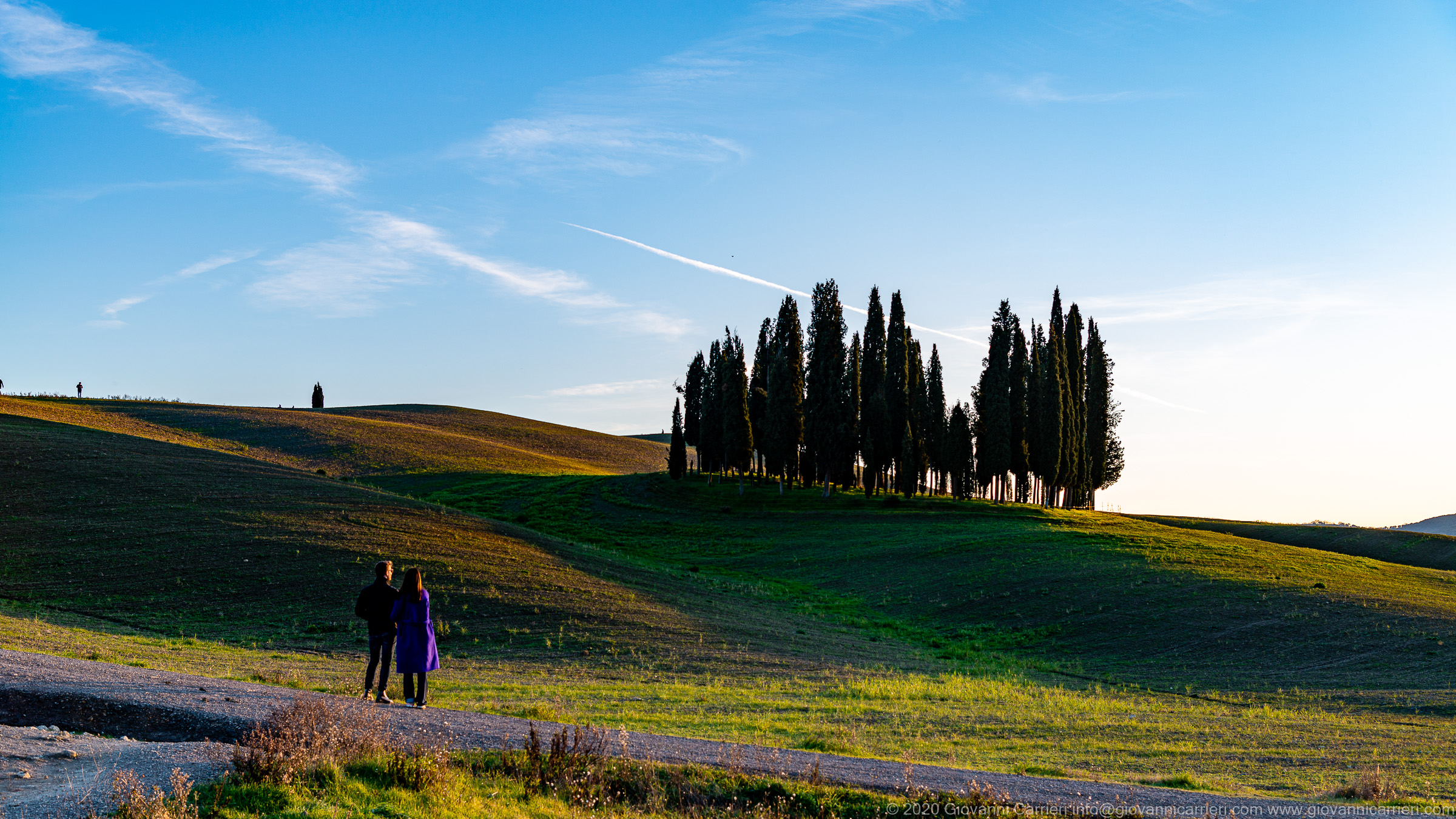 """Cypresses The cypresses of San Quirico d'Orcia stand out on a hill visible from the Via Cassia in """"I Triboli""""."""