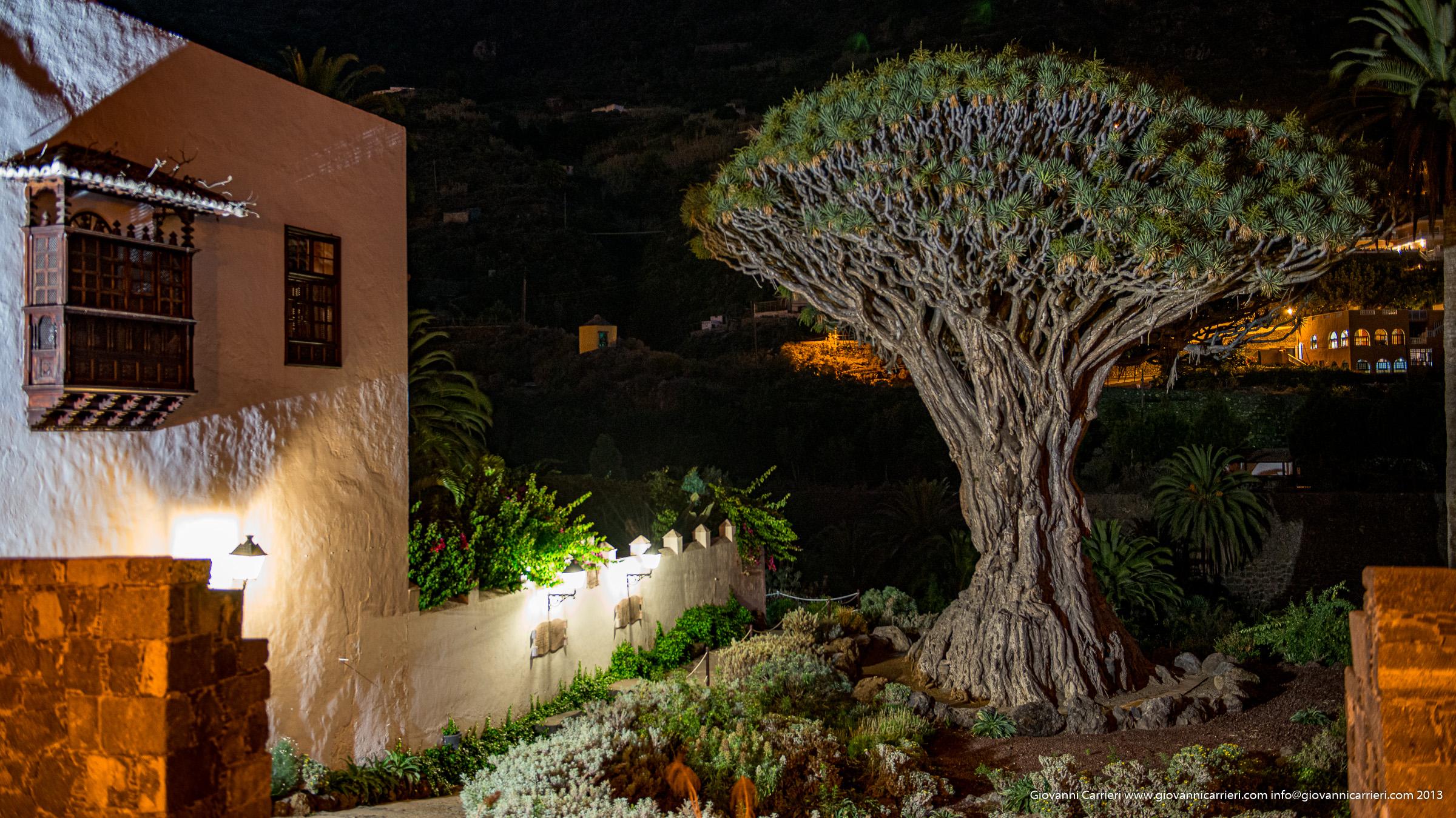 L'albero del Drago - Tenerife