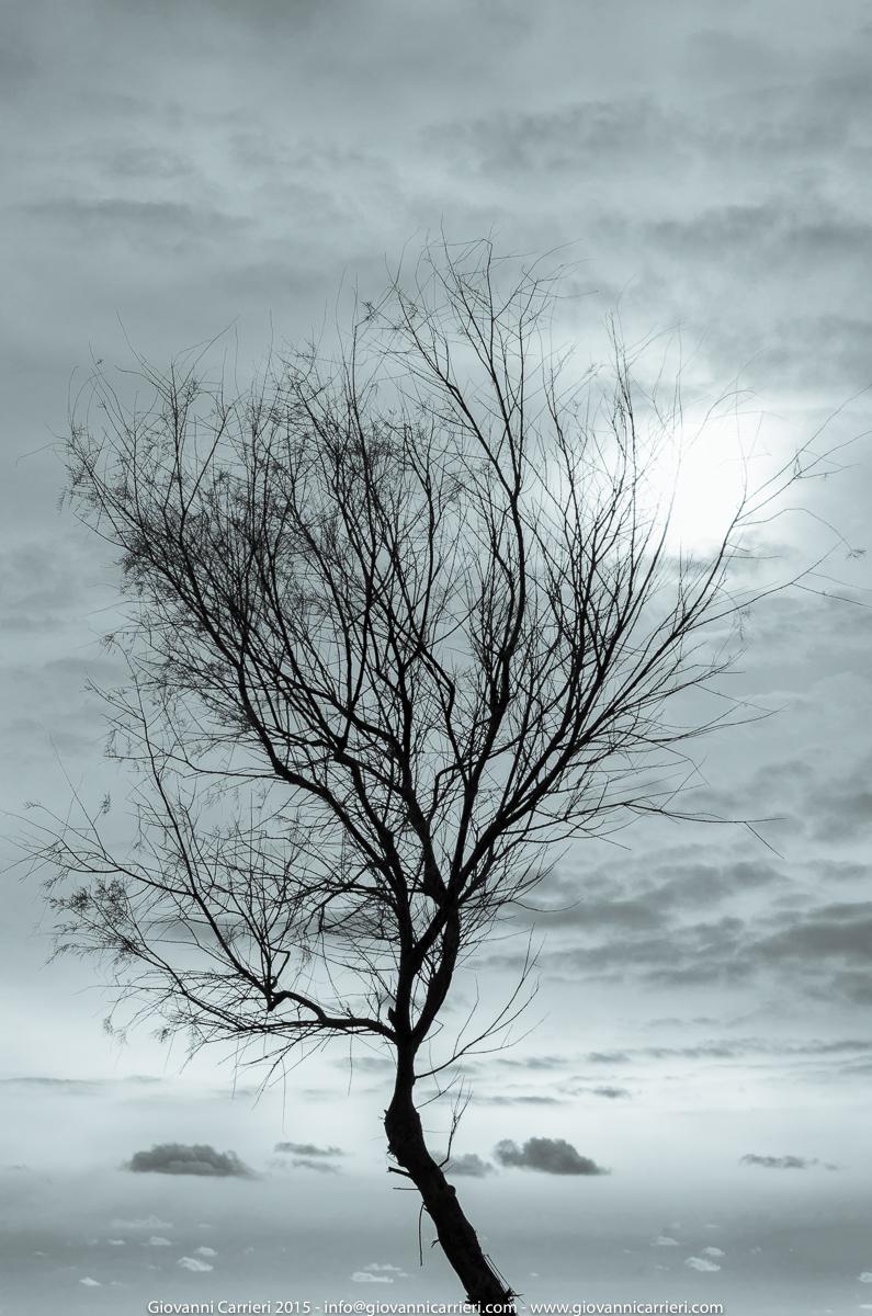 L'inverno e gli alberi di Comino - Malta