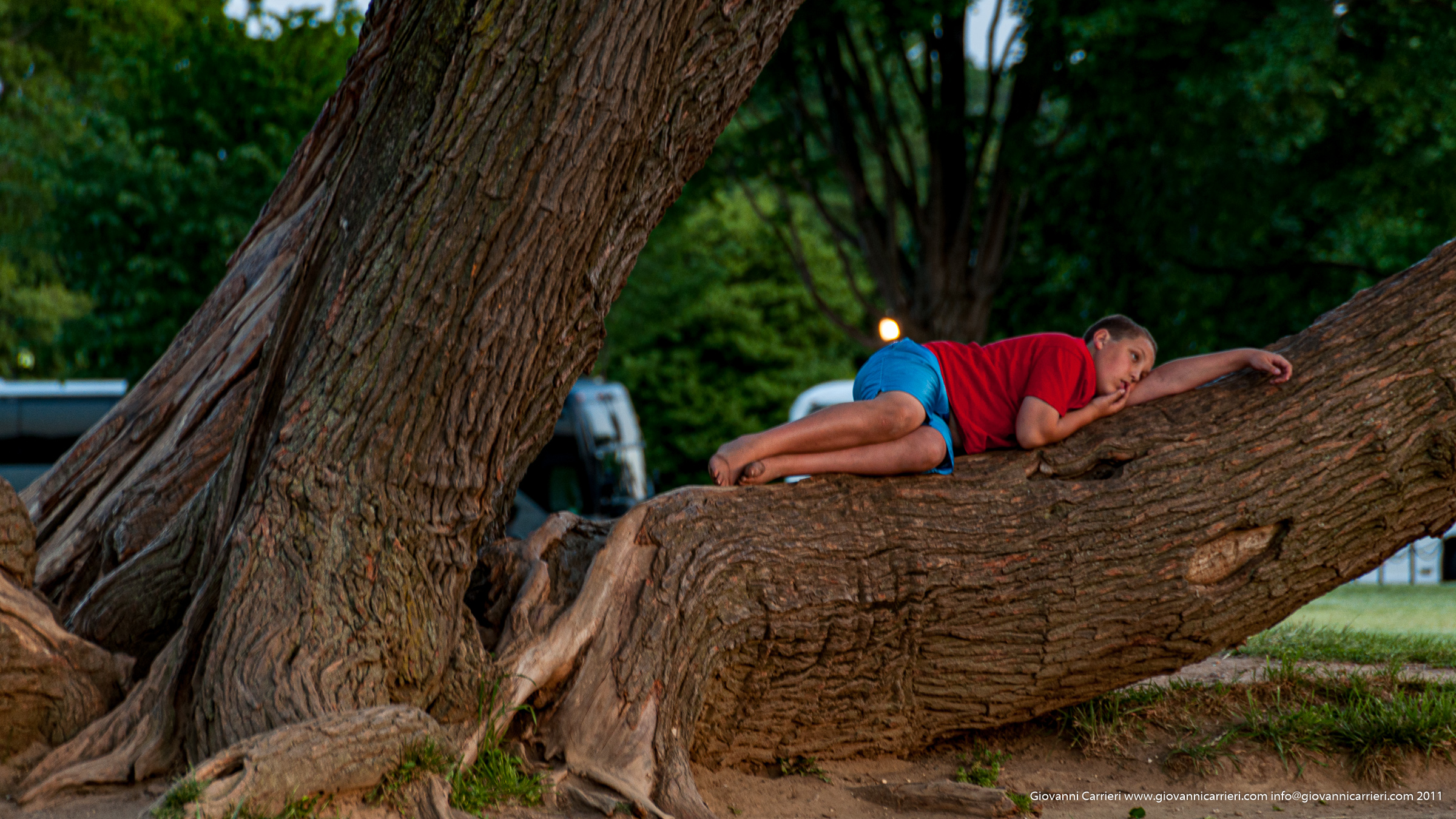 Relax on tree - Manhattan
